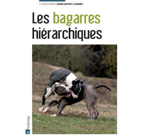 Les bagarres hiérarchiques chez le chien, document écrit par Julie Willems, comportementaliste animalier Bruxelles