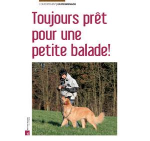 Promener son chien, document écrit par Julie Willems, comportementaliste du chien sur Bruxelles