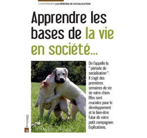 la sociabilisation du chien, document écrit par Julie Willems, comportementaliste du chien de Bruxelles