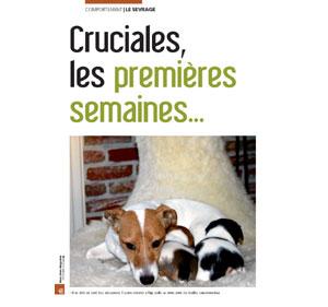 la socialisation du chien, document écrit par Julie Willems, comportementaliste sur Bruxelles