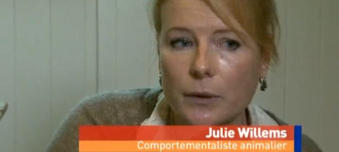 Emission «Images à l'appui» – RTL-TVI