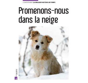 Promener son chien dans la neige, document écrit par Julie Willems, comportementaliste chiens Bruxelles