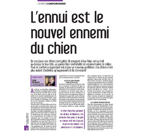 L'ennui du chien, document rédigé par Julie Willems, comportementaliste chiens Bruxelles