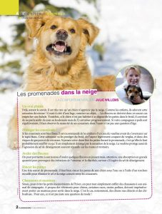 Promener avec son chien dans la neige, article rédigé par Julie Willems, comportementaliste chien Auderghem