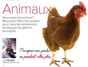 Mes poules ne pondent plus, article rédigé par Julie Willems, comportementaliste animalier Bruxelles