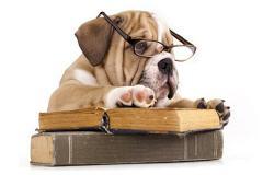 formation comportementaliste canin - chien qui étudie