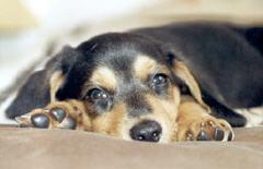 Consultations comportementaliste canin ou félin, à domicile ou aux cabinets. Bruxelles, Brabant Wallon, Hainaut, Namur et Liège