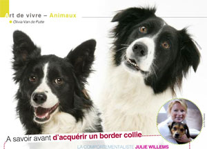 le border collie, article rédigé par Julie Willems, comportementaliste canin, Auderghem