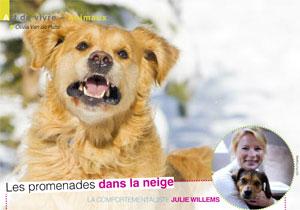 promener avec son chien en hiver, article rédigé par Julie Willems, comportementaliste canin - Auderghem