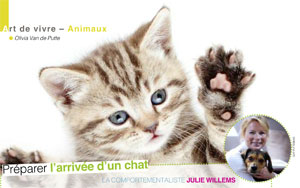 Accueillir un chaton à la maison, article rédigé par Julie Willems, comportementaliste chat Auderghem