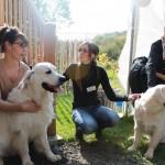 Inauguration du centre de bien-être animal - comportementaliste pour chiens