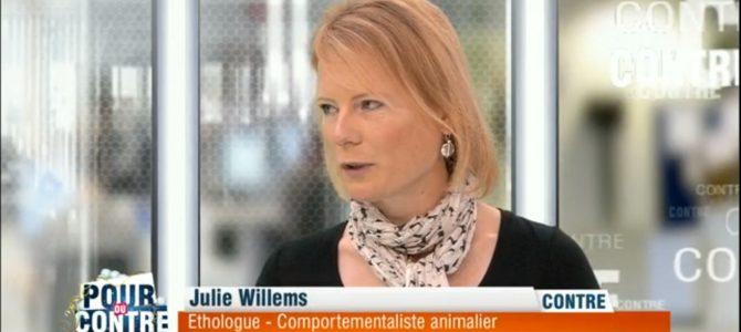 Pour ou contre des cadeaux sous le sapin pour nos animaux ? – RTL-TVI