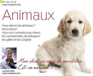Mon chien ne cesse de mordiller… Est-ce normal ? – Plus Magazine – Novembre 2015