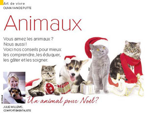 Animal en cadeau de Noël, document rédigé par Julie Willems, comportementaliste pour chiens et chats Bxl