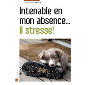 Mon chien stresse quand je ne suis pas là, document écrit par Julie Willems, comportementaliste chien de Bxl