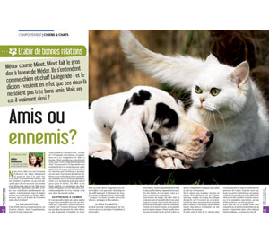 Entente entre chiens et chats, document écrit par Julie Willems, comportementaliste chiens de Bruxelles