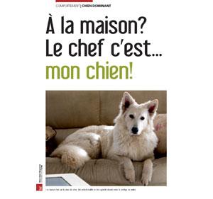 Hiérarchie chez le chien, document écrit par Julie Willems, comportementaliste chien sur Bxl