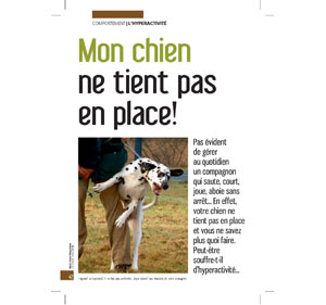 Chien hyperactif, document écrit par Julie Willems, comportementaliste du chien de Bxl