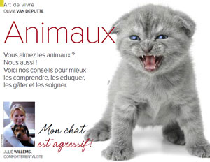 Chat agressif, article rédigé par Julie Willems, comportementaliste pour chats à Bruxelles