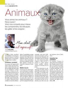 Mon chat est agressif, article rédigé par Julie Willems, comportementaliste félin à Bruxelles