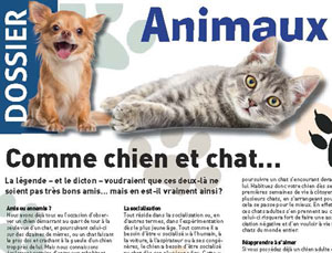 Chien et chat ensemble, article rédigé par Julie Willems, comportementaliste canin à Bruxelles