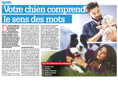 chien intelligent, Article avec Julie Willems, éthologue-comportementaliste canin