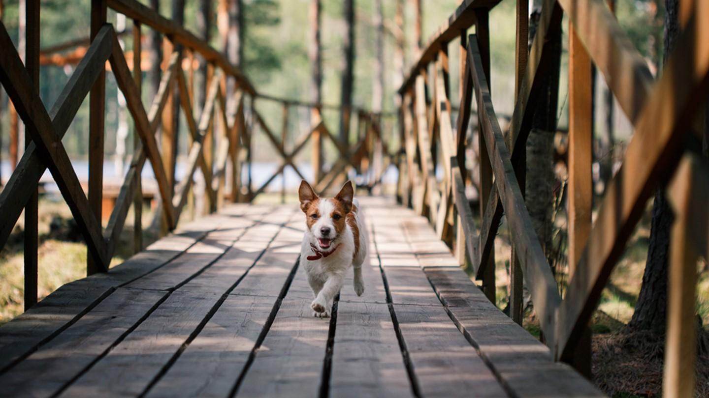 Chien qui promène, article rédigé pour la société Viyo par Julie Willems, comportementaliste canin
