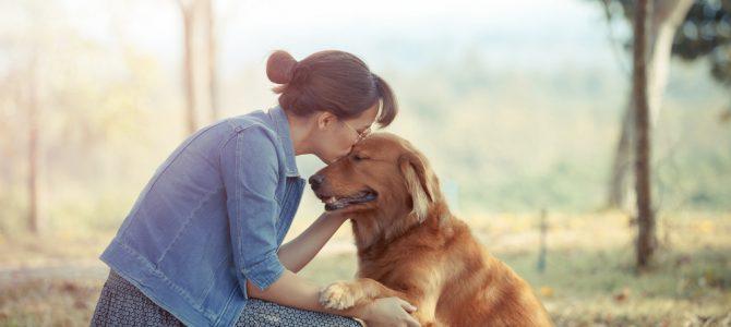 Que faire avec son chien si on ne peut le prendre avec soi en vacances ?
