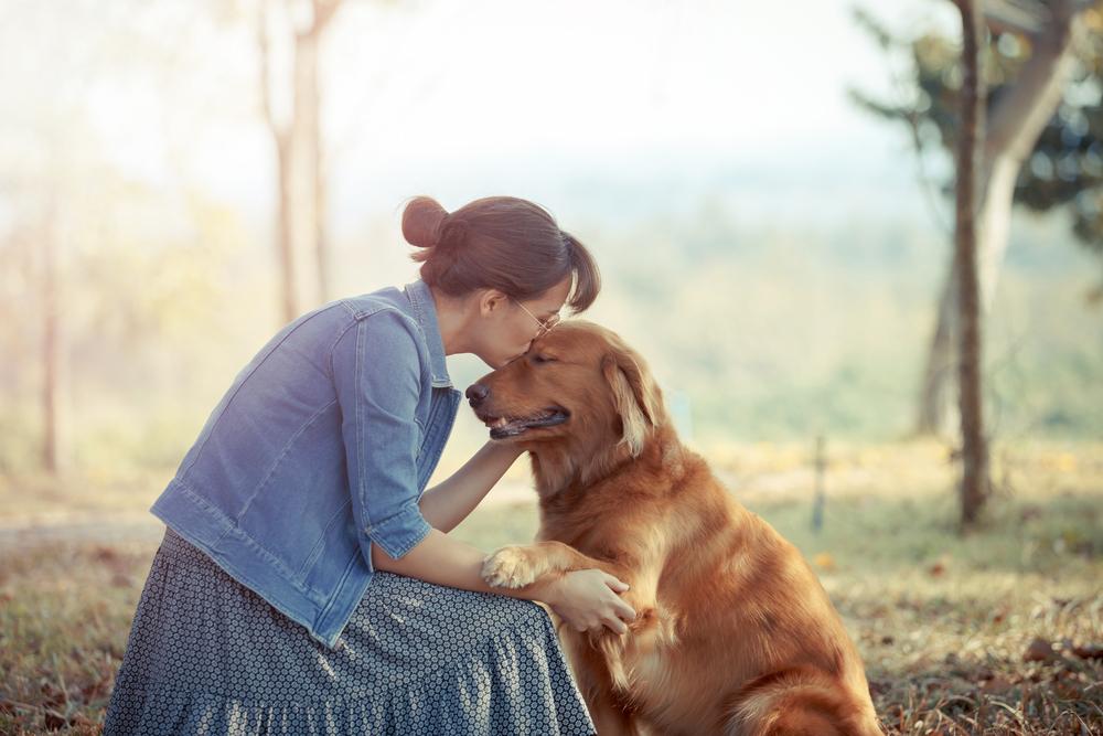 Partir en vacances sans son chien, écrit par Julie Willems, comportementaliste canin