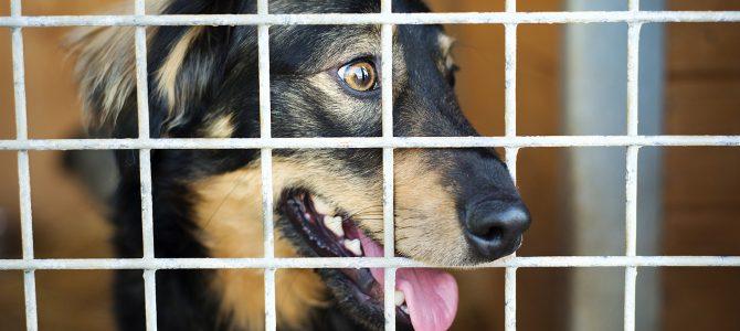 Adopter un chien en refuge, une bonne idée ?