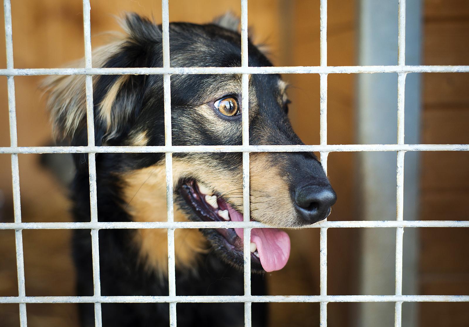 chien au refuge