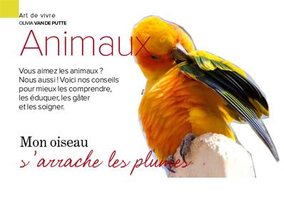 Perroquet s'arrache les plumes, Article écrit par Julie Willems, comportementaliste canin