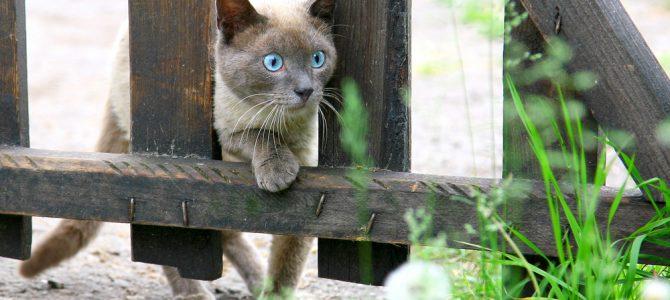 Mon chat : un grand voyageur !