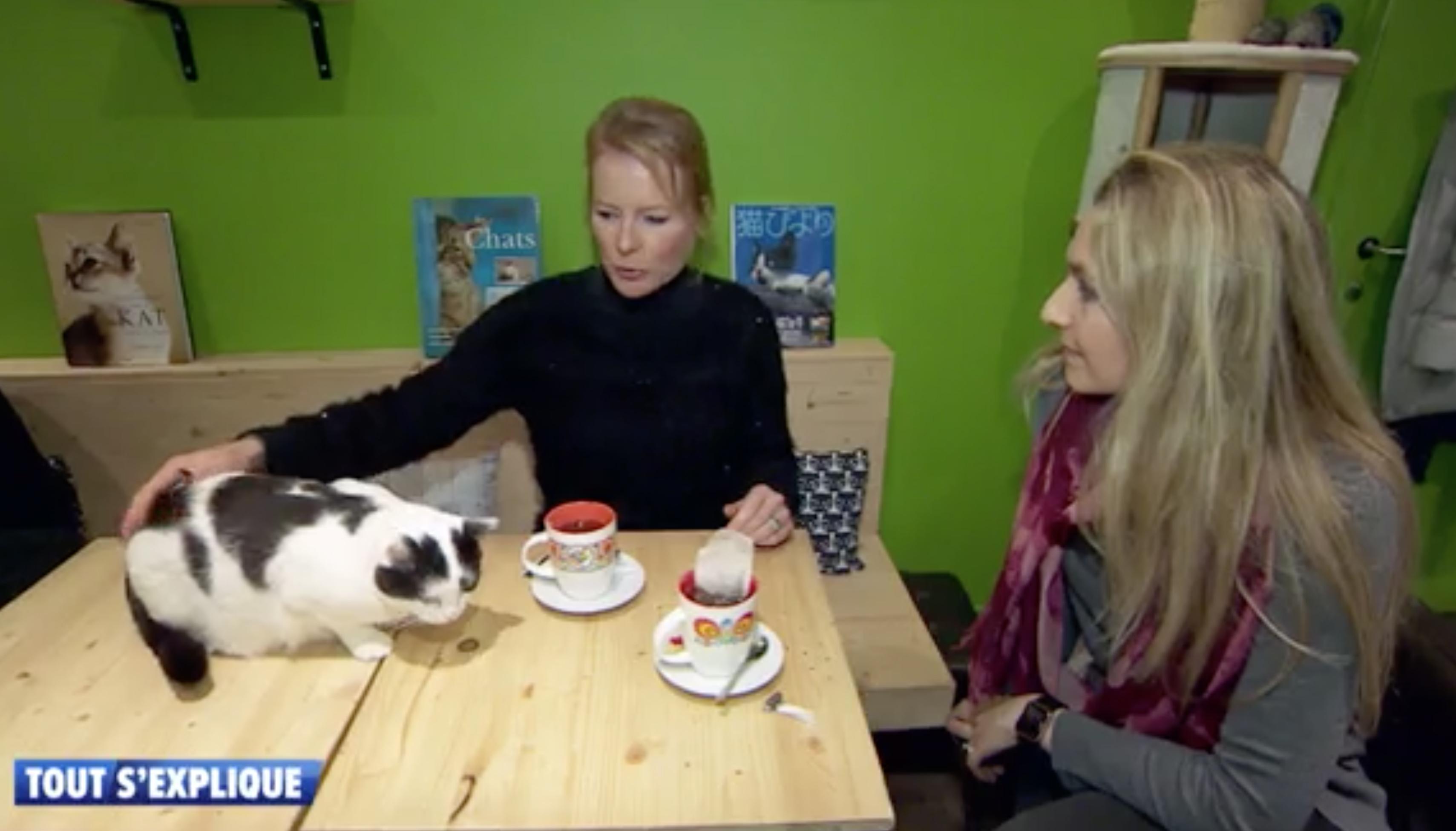 bar à chats, Emission Tout s'explique avec Julie Willems, comportementaliste canin