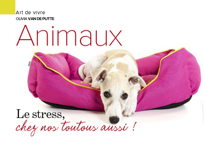 stress chien, Article rédigé par Julie Willems, comportementaliste canin