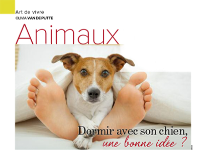 chien sur le lit, Article rédigé par Julie Willems, comportementaliste canin