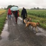 Malinois en promenade