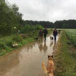 Balade canine sous la pluie