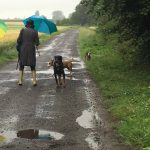 Bull-terrier et Dobermann en balade