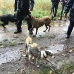 Cairn-terrier en relation avec d'autres chiens