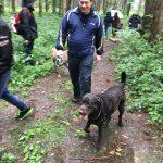 Labrador en balade dans les bois