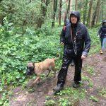 Berger malinois se baladant dans les bois