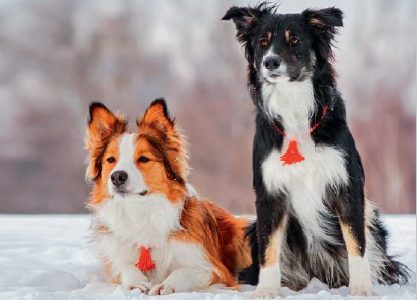 Activités hivernales canines et félines
