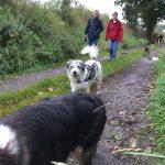 Promenade canine dans les bois
