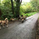 Cairn-terrier, Loulou de Poméranie, Malinois, Bulldog et Husky