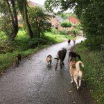 Promenade canine sur une route de campagne