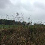 Balade canine nuageuse à Chaumont-Gistoux