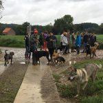 Maitres et chiens attendant le début de la balade