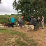 Rassemblement canin au milieu des champs