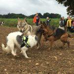 Jeux et interactions entre chiens